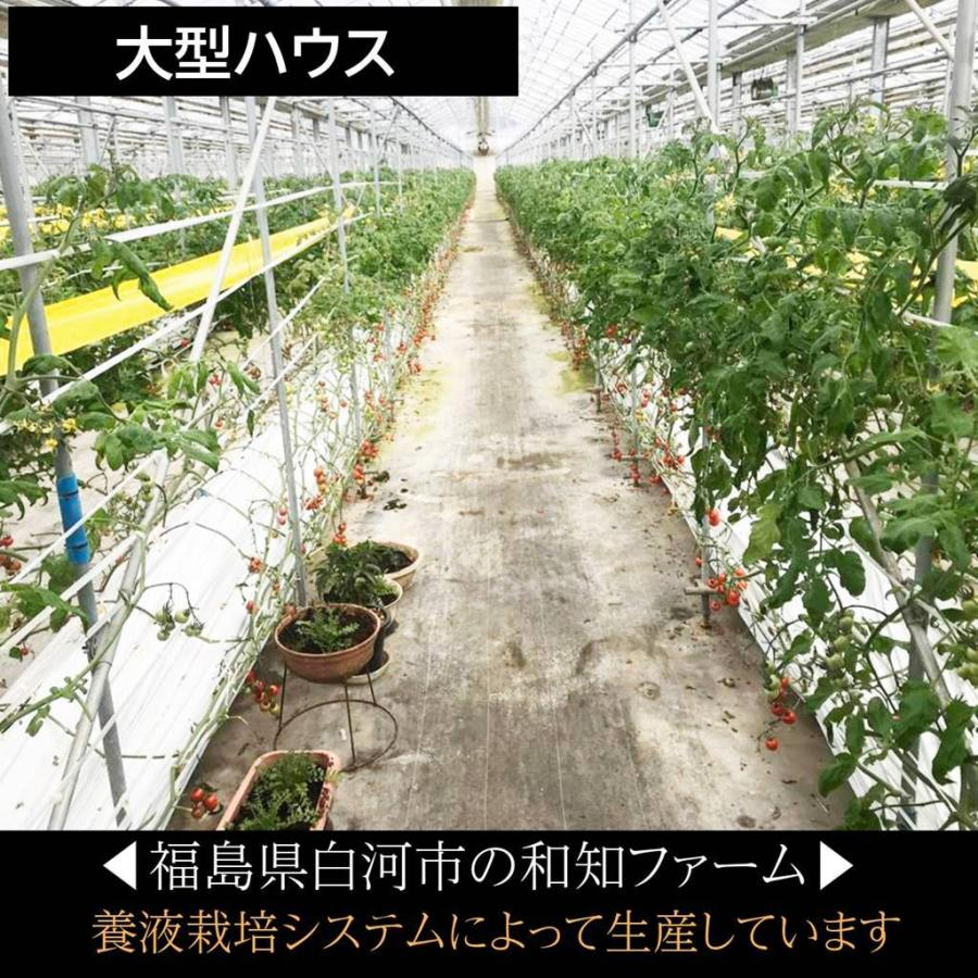 和知ファーム 福島 中玉トマト 1.8kg 白河産|sweetjuicyparadise|06