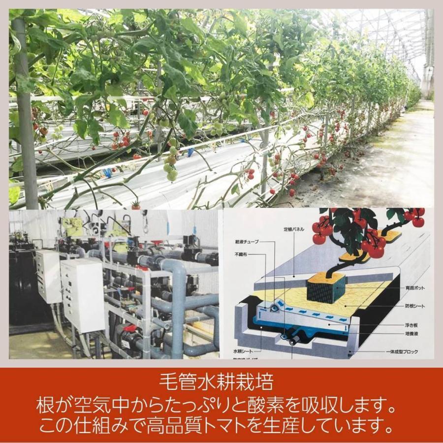 和知ファーム 福島 中玉トマト 1.8kg 白河産|sweetjuicyparadise|09