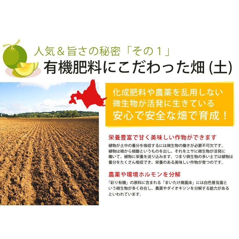 メロン 富良野メロン 北海道産 赤肉 秀品 2Lサイズ 2玉 約1.5kg以上 送料無料 sweetvegetable 13