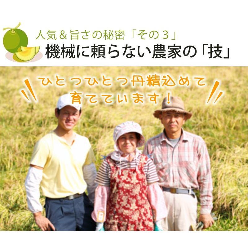メロン 富良野メロン 北海道産 赤肉 秀品 2Lサイズ 2玉 約1.5kg以上 送料無料 sweetvegetable 15