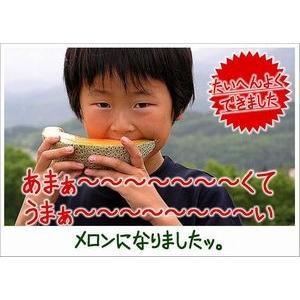 メロン 富良野メロン 北海道産 赤肉 秀品 2Lサイズ 2玉 約1.5kg以上 送料無料 sweetvegetable 17
