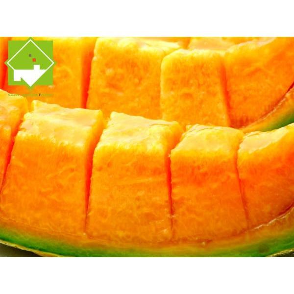 メロン 富良野メロン 北海道産 赤肉 秀品 2Lサイズ 2玉 約1.5kg以上 送料無料 sweetvegetable 07