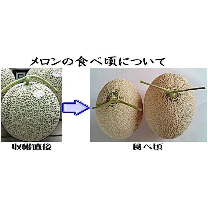 メロン 富良野メロン 北海道産 赤肉 秀品 2Lサイズ 2玉 約1.5kg以上 送料無料 sweetvegetable 10