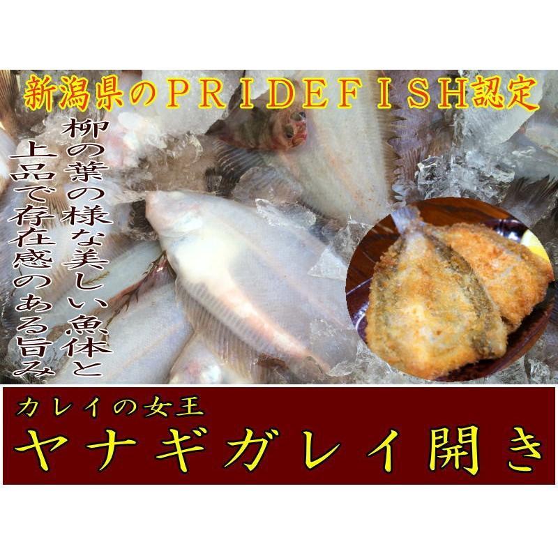 新潟ブランド魚ヤナギガレイ開き10枚入り5パック|syowamaru