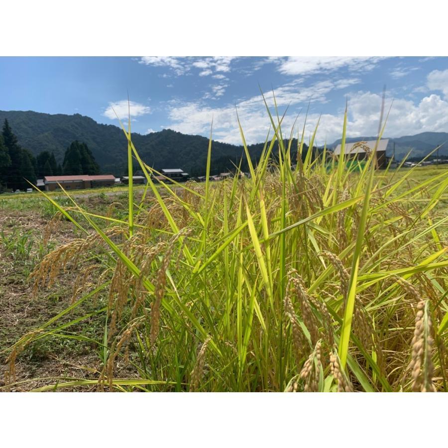 新米 雪室貯蔵米 令和3年産 南魚沼産コシヒカリ 塩沢産100%特別栽培米と慣行栽培米の5kg計10kgです。送料無料(本州) |syugyokunoippin|03