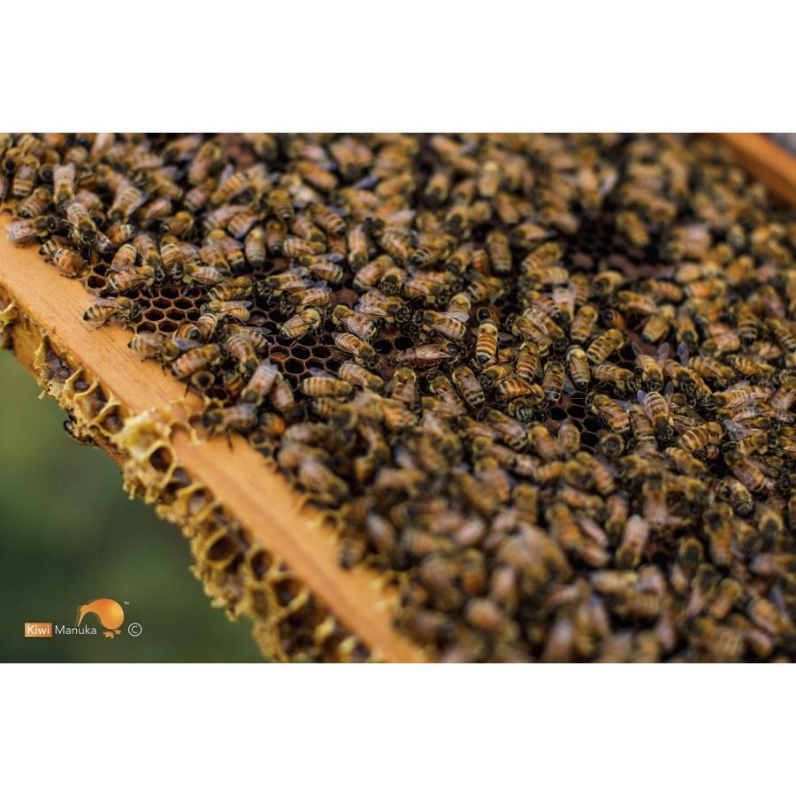 キウィ・マヌカハニー Kiwi Manuka Honey UMF+5 250g 世界初の医療用マヌカハニー 送料無料|tabeluca|09