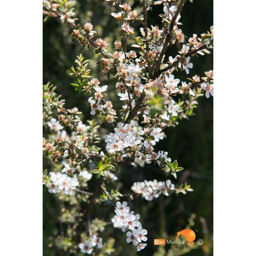 キウィ・マヌカハニー Kiwi Manuka Honey UMF+5 250g 世界初の医療用マヌカハニー 送料無料|tabeluca|10