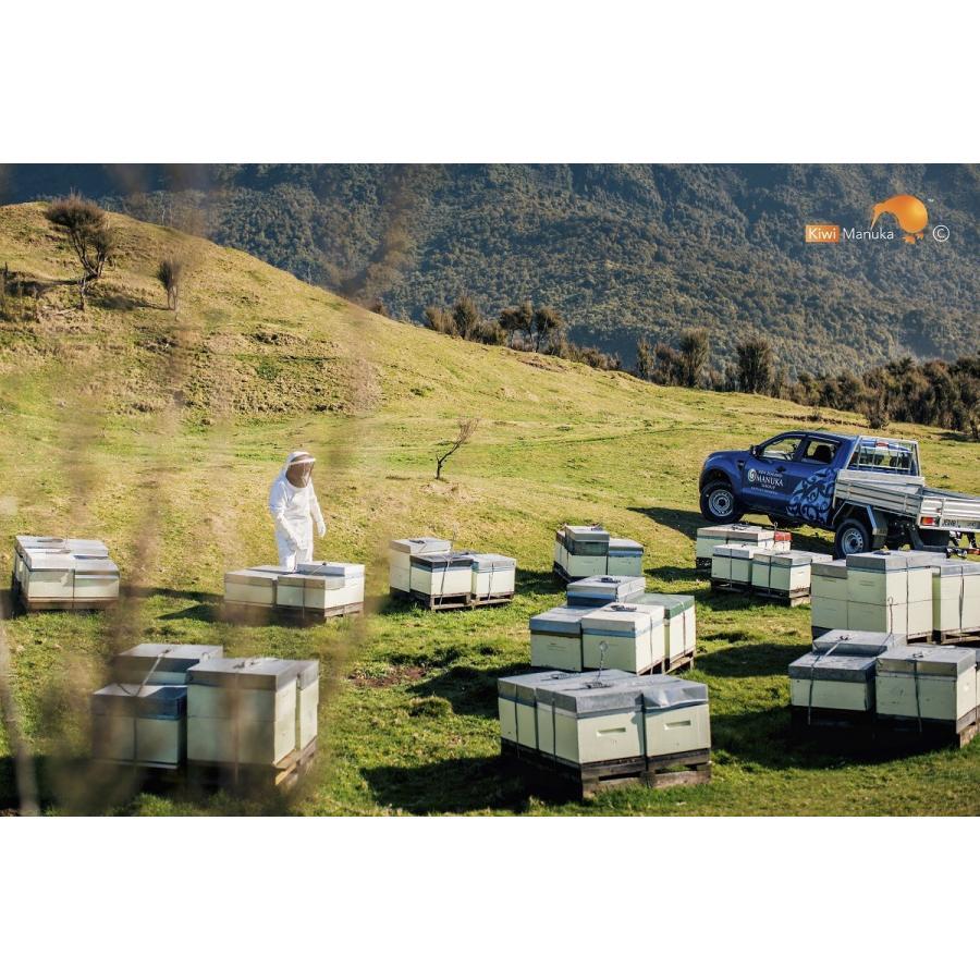 キウィ・マヌカハニー Kiwi Manuka Honey UMF+10 250g 2個セット 世界初の医療用マヌカハニー 送料無料|tabeluca|08