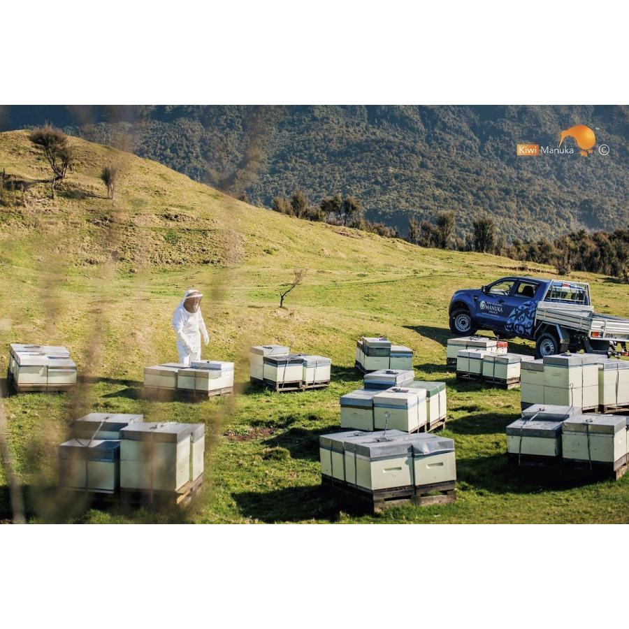 キウィ・マヌカハニー Kiwi Manuka Honey UMF+15 250g 2個セット 世界初の医療用マヌカハニー 送料無料 tabeluca 06