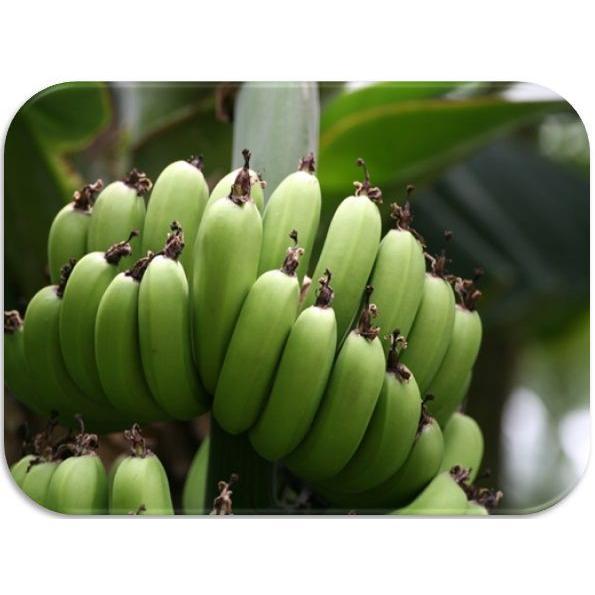 世界美食探究 タイ産 無添加ドライバナナ 1kg 【干しバナナ、乾燥バナナ】|tabemon-dikara|03