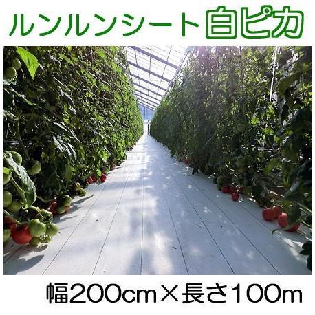 ルンルンシート白ピカ 幅200cm×100m 光合成促進 遮熱性 防草シート 小泉製麻 法人個人選択