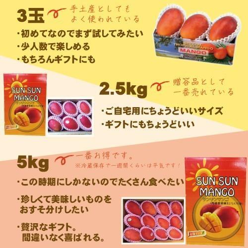 お中元 御中元 ギフト アップルマンゴー2.5kg 台湾産 期間限定 送料無料 taiwanbussankan 13