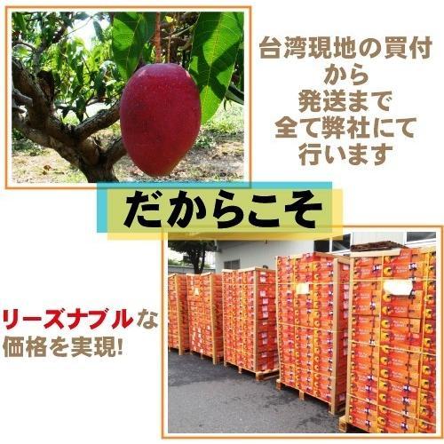 お中元 御中元 ギフト アップルマンゴー2.5kg 台湾産 期間限定 送料無料 taiwanbussankan 04