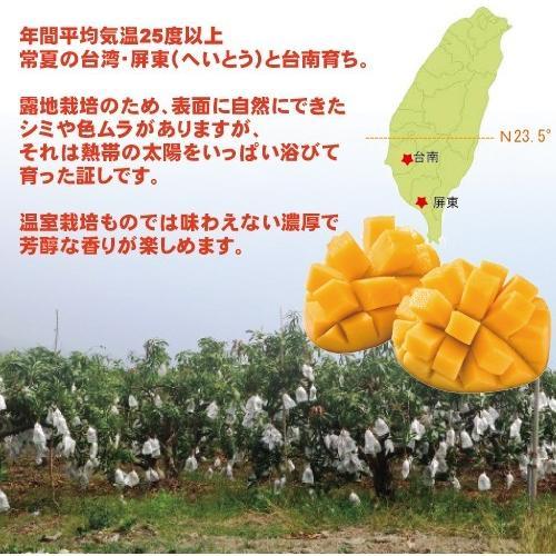 お中元 御中元 ギフト アップルマンゴー2.5kg 台湾産 期間限定 送料無料 taiwanbussankan 05