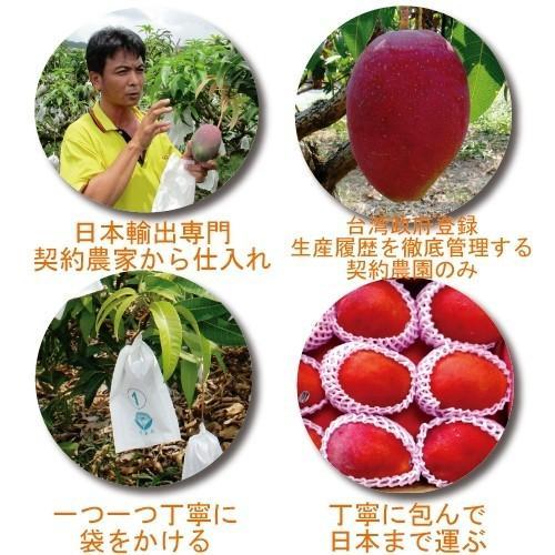 お中元 御中元 ギフト アップルマンゴー2.5kg 台湾産 期間限定 送料無料 taiwanbussankan 07