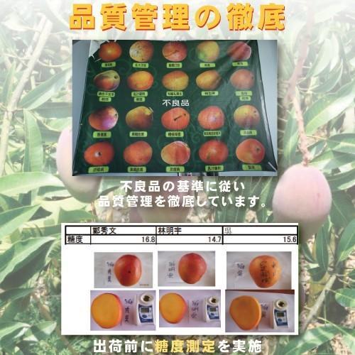 お中元 御中元 ギフト アップルマンゴー2.5kg 台湾産 期間限定 送料無料 taiwanbussankan 08