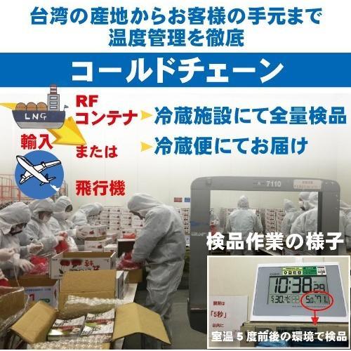 お中元 御中元 ギフト アップルマンゴー2.5kg 台湾産 期間限定 送料無料 taiwanbussankan 09