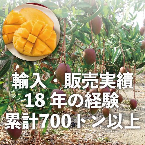 お中元 御中元 ギフト アップルマンゴー3玉 台湾産 期間限定 送料無料|taiwanbussankan|02