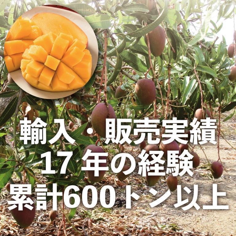 お中元 御中元 ギフト アップルマンゴー5kg 台湾産 期間限定 送料無料 taiwanbussankan 02