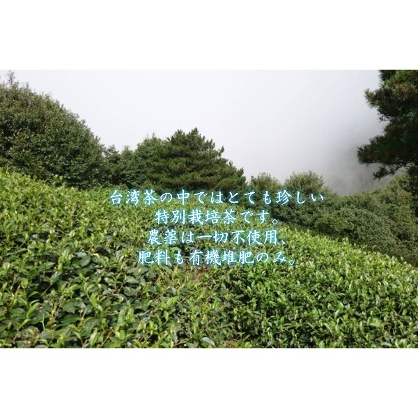 凍頂烏龍茶 無農薬 高山茶 台湾南投県 taiwanbussankan 03