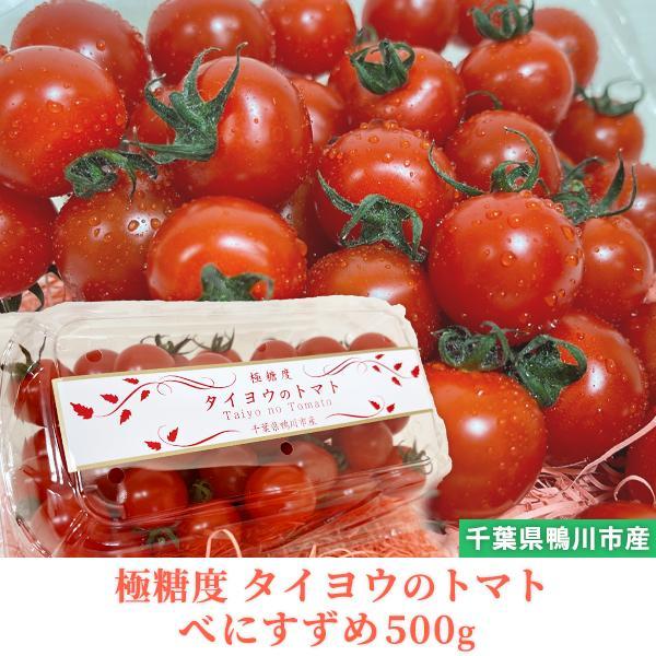 トマト フルーツトマト 産地直送 千葉県産 お取り寄せ タイヨウのトマトべにすずめパック 500g taiyo-no-tomato