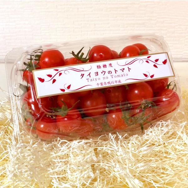 トマト フルーツトマト 産地直送 千葉県産 お取り寄せ タイヨウのトマトべにすずめパック 500g taiyo-no-tomato 02
