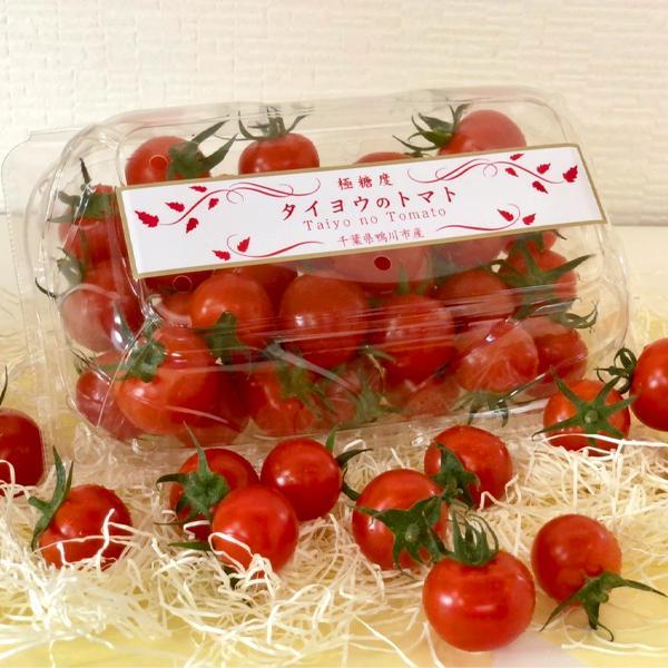 トマト フルーツトマト 産地直送 千葉県産 お取り寄せ タイヨウのトマトべにすずめパック 500g taiyo-no-tomato 03