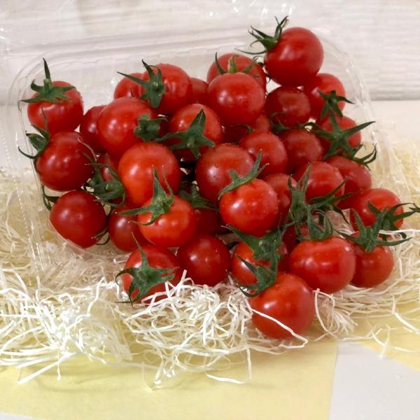 【川の手荒川まつりセット】フルーツトマト 産地直送 千葉県産 お取り寄せ タイヨウのトマトべにすずめ300g+昭和のトマトジャム1個トマトジュース1本セット taiyo-no-tomato 06