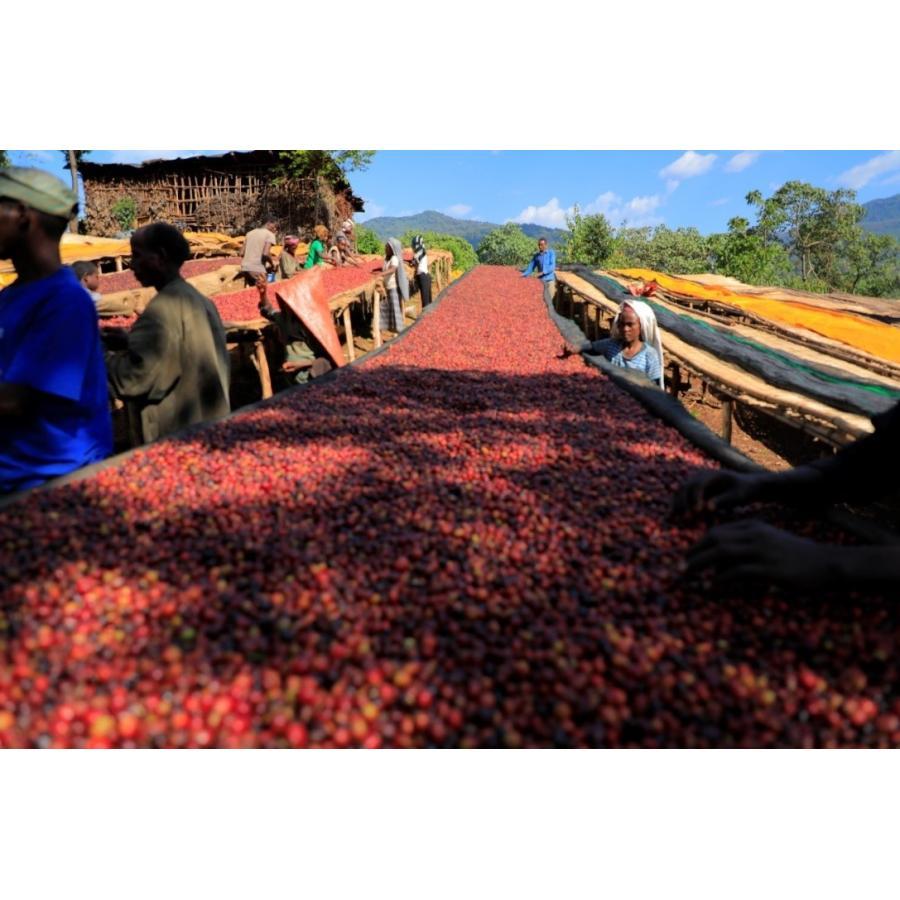 【送料無料】メール便 コーヒー 生豆 エチオピア ゲイシャ ゲレザ G3  500g(250g×2)【同梱不可】 送料無料(一部地域を除く)|takaomarket|02