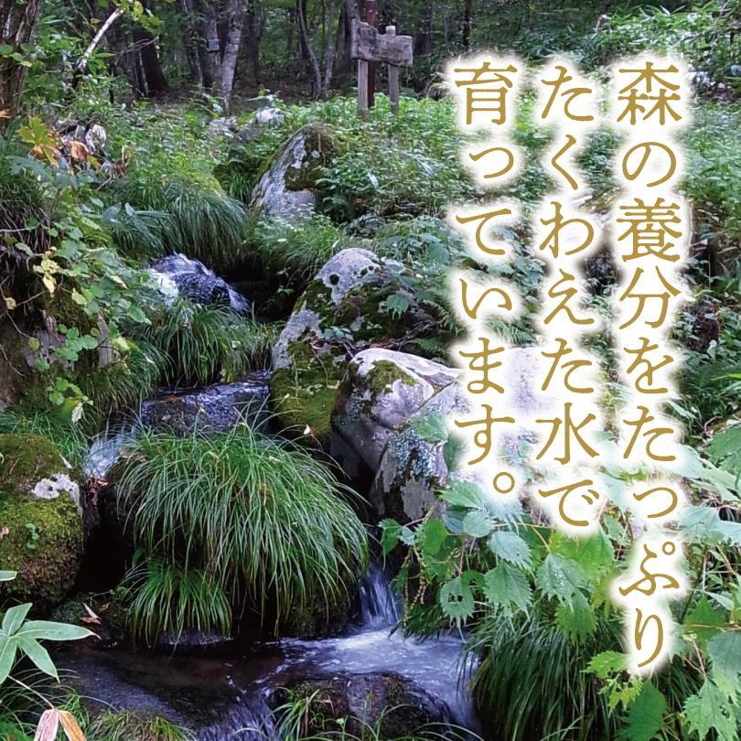 みやぎの天気で育った気仙沼産と登米産のひとめぼれ 300g takeyamarice 03