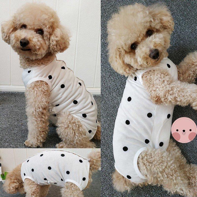 の 手術 後 術 避妊 犬