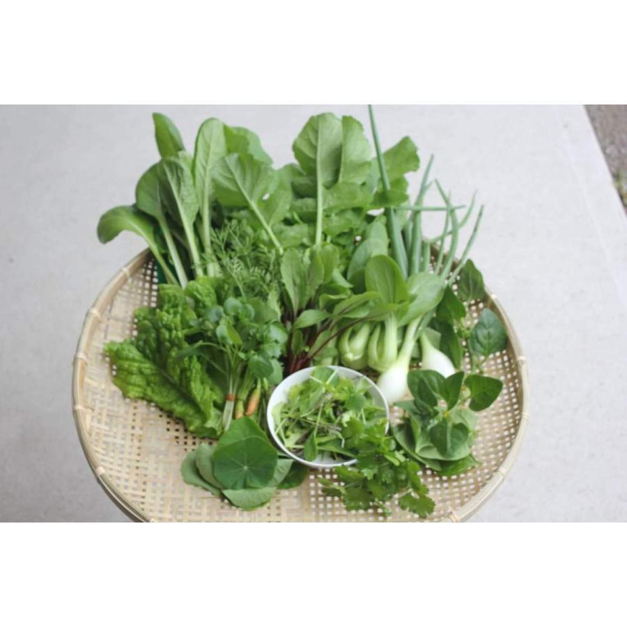 農薬不使用野菜セット 丹波篠山の野菜 火曜日発送 発送曜日変更になりました|tanba-akari-farm|03