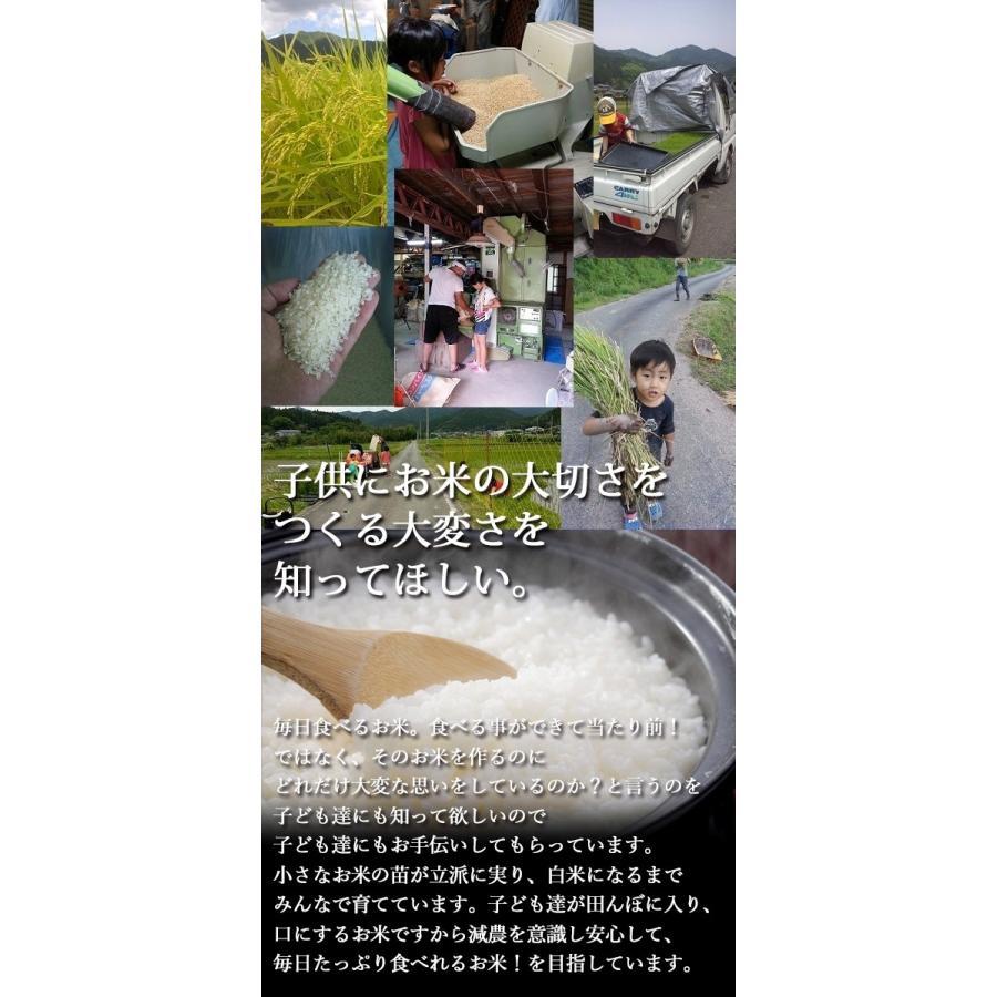 新米 丹波産コシヒカリ 除草剤、農薬、化学肥料一切不使用 あかりの白雫 3.0kg 精米※未選別 tanba-akari-farm 04