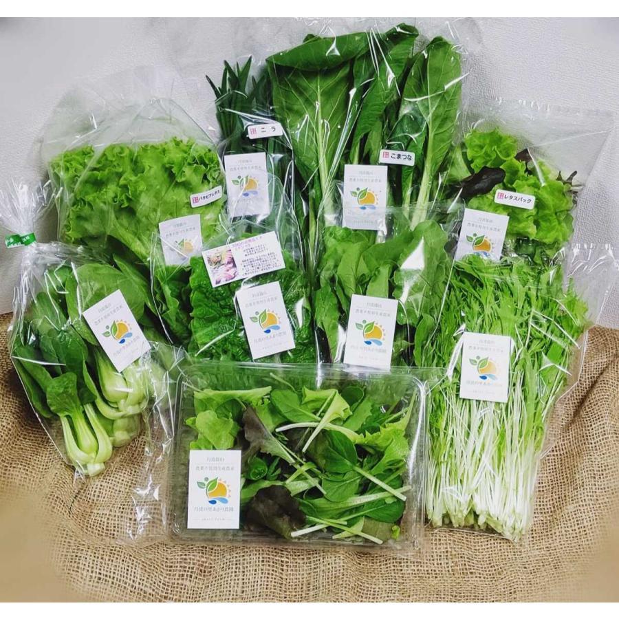 送料込 新鮮野菜セット 数量限定 丹波篠山野菜 火曜日ごとの発送です。発送日変更しました tanba-akari-farm