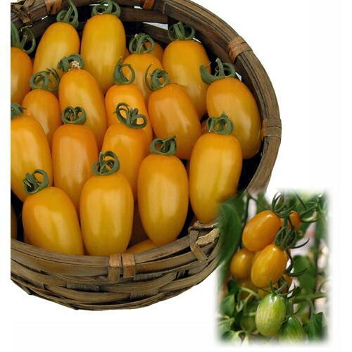 !超美品再入荷品質至上! ナント種苗 トマト カナリーベル 小袋 無料