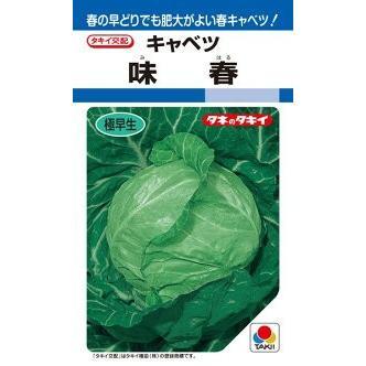 タキイ種苗 蔵 キャベツ DF 低価格 味春