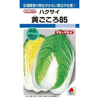 5☆大好評 タキイ種苗 ハクサイ 白菜 黄ごころ85 送料0円 小袋 ペレット 100粒