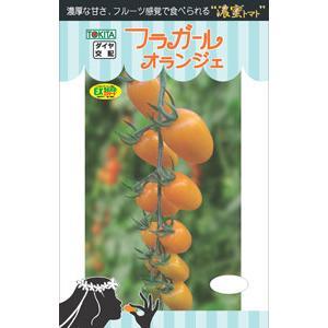 トキタ種苗 ミニトマト フラガール オランジェ 小袋 メーカー公式ショップ 奉呈