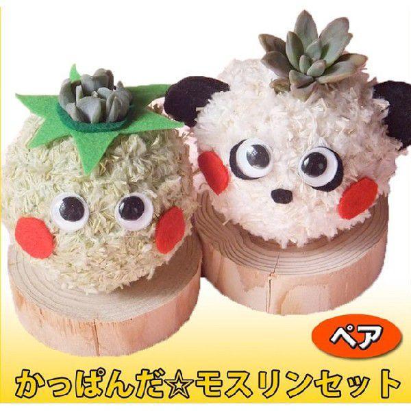 多肉植物苔玉「かっぱんだ☆モスリン」セット/無料ギフトラッピングOK|tawawa