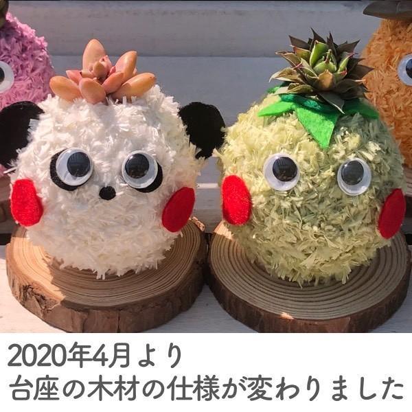 多肉植物苔玉「かっぱんだ☆モスリン」セット/無料ギフトラッピングOK|tawawa|02