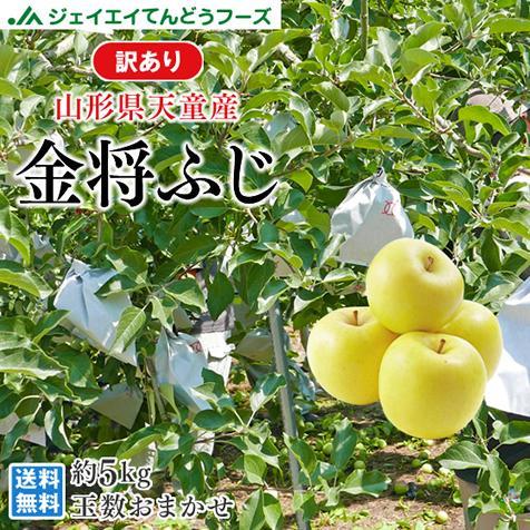 訳あり 山形県天童産 金将ふじ 約5kg りんご