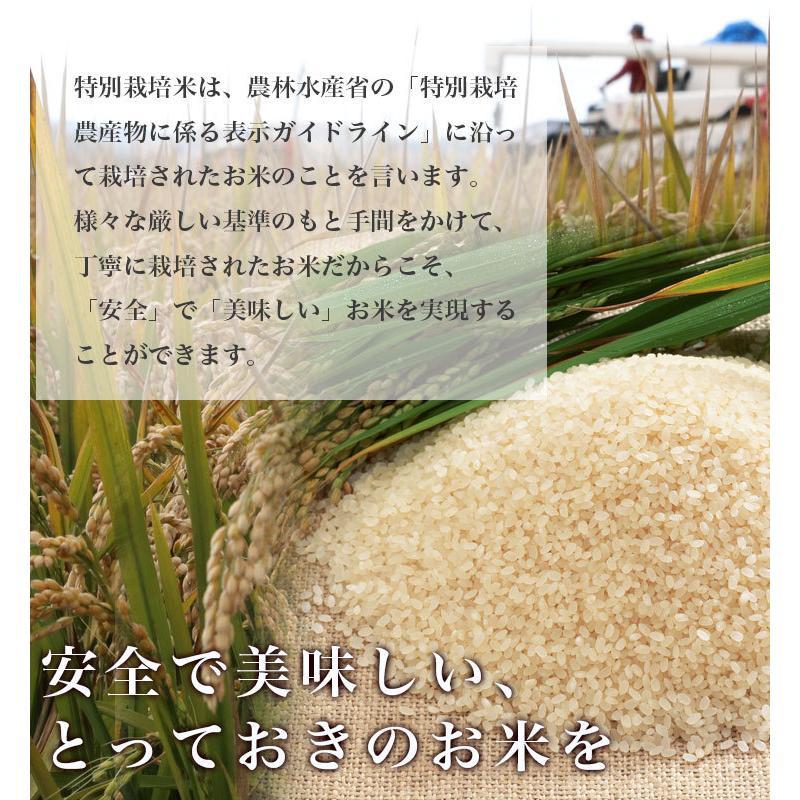 送料無料  令和2年産 北海道米 安心 安全 特別栽培米 お米 当麻  とっときドリーム(特別栽培 ゆめぴりか 100%) 10kg 米 ギフト 祝い 贈り物|tohma-greenlife|07