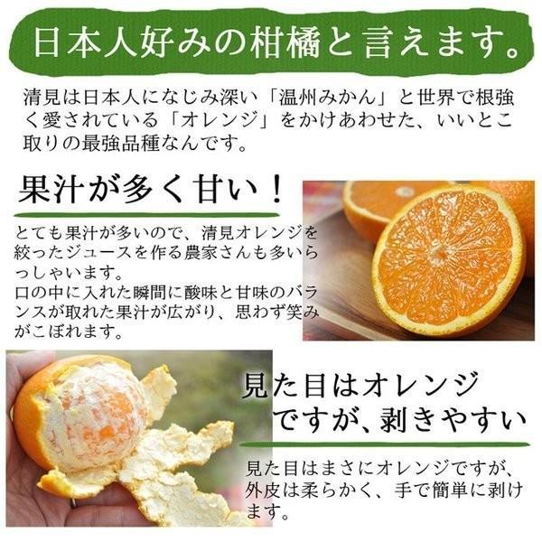 オレンジ 清見