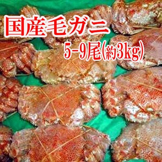 毛蟹 5-9杯 約3キロ 蟹 カニ かに 毛ガニ 北海道 冷凍A タイムセール|toretate1ban