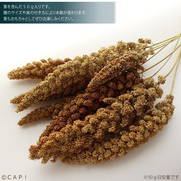 【熊本県産】有機JAS認定品 粟の穂 50g 2020年産 ※ろのわ赤ラベル※ torimura 05