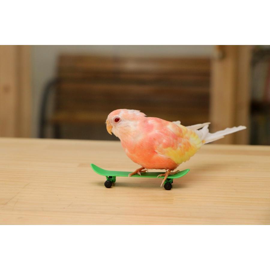 インコのおもちゃスケートボード(小) 3個セット スケボー|torippie