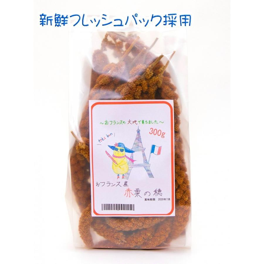 フランス産 高級 赤粟の穂300gパック 赤粟穂 新鮮フレッシュ袋採用|torippie