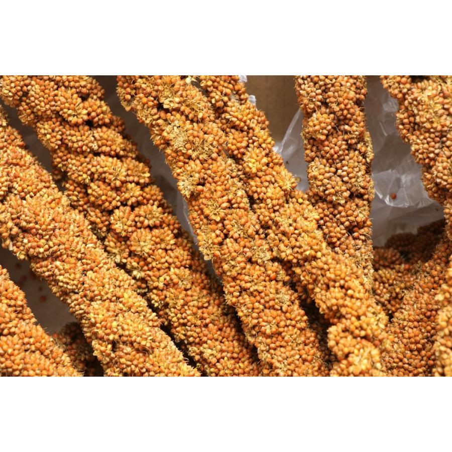 フランス産 高級 赤粟の穂300gパック 赤粟穂 新鮮フレッシュ袋採用|torippie|02