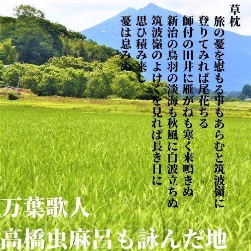 精米済 10kg 茨城県産コシヒカリ 寿米流(すまいる)|toyosakiya|11