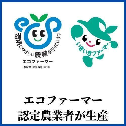 精米済 10kg 茨城県産コシヒカリ 寿米流(すまいる)|toyosakiya|12